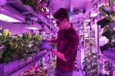 Com o sistema, as hortaliças são pulverizadas nas raízes e armazenadas em uma câmera escura (Foto: acervo pessoal)