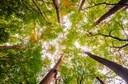 Foram mapeadas mais de 1300 árvores da área Central