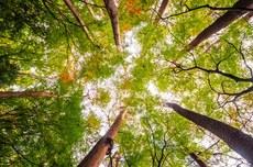 Mais de 1300 árvores da área Central da cidade   Foto: Freepik