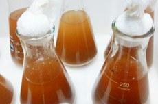 Pesquisa utilizou leveduras de resíduos industriais de cerveja