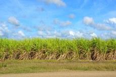 Plantação saudável da planta Fonte: pixabay.com
