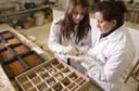 Alunas realizam pesquisa em laboratório do Câmpus Francisco Beltrão (Foto: Decom)