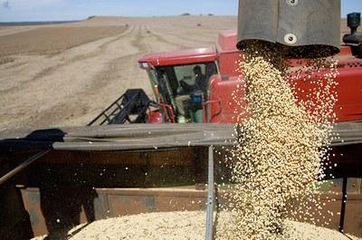 Colheita de soja (Foto: Reprodução/ Freeimages)